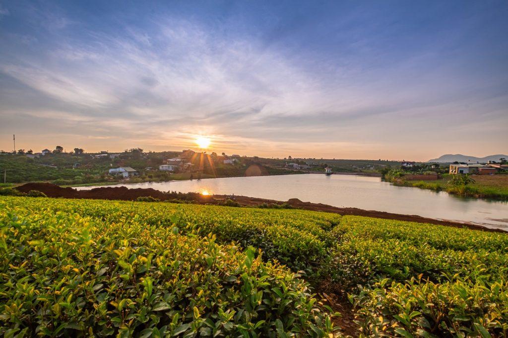 Tea Leaves Farm Sunset River  - bboygecko / Pixabay